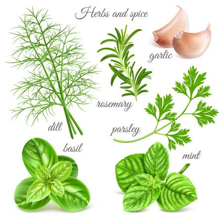 Kräuter-und Gewürzpflanzen