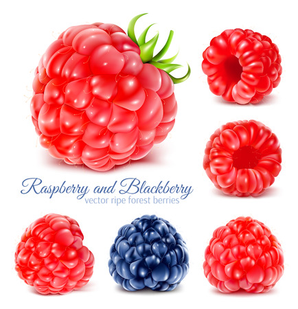 Raspberries and blackberry. Vectores