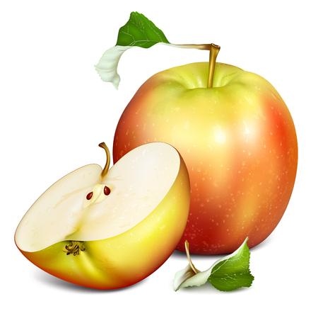 Całe jabłko i pół cięcia jabłek. ilustracji wektorowych