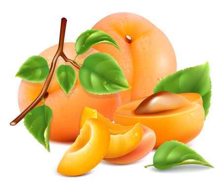 apricots: Apricots with slices and leaves. Vector illustration.