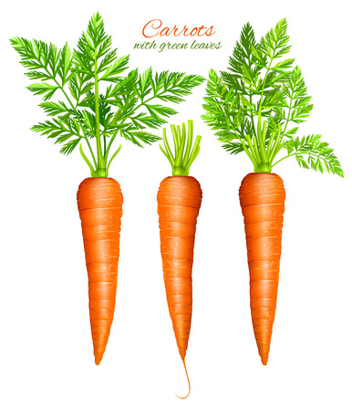 Vector illustration of carrots with leaves
