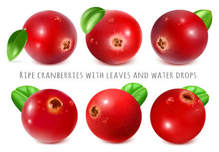 cowberry: Ripe red cranberries with leaves. Fully editable handmade mesh. Vector illustration