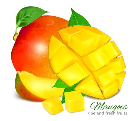 ripe: Ripe fresh mangoes. Vector illustration