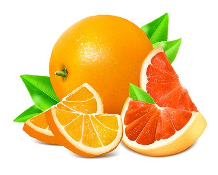 dewdrop: Fresh ripe oranges and grapefruits. Vector illustration. Illustration