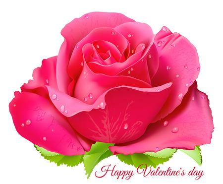 Pink rose. Happy Valentine day. Fully editable handmade mesh. Vector illustration.