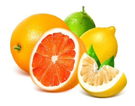 citrus fruits: Fresh citrus fruits. Vector illustration. Fully editable handmade mesh.