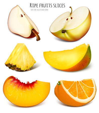 Slices of fresh fruits. Fully editable handmade mesh. Vector illustration.