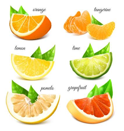lime: Fresh citrus fruits. Vector illustration. Fully editable handmade mesh.
