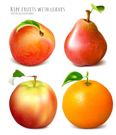 fully: Collection of fresh ripe fruits. Fully editable handmade mesh. Vector illustration.