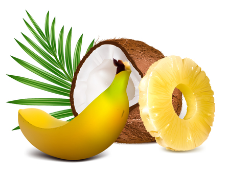 Tropical fruits, pineapple, coconut, banana. Fully editable handmade mesh vector illustration