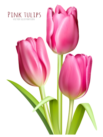 leaf: Spring pink tulips. Fully editable handmade mesh. Vector illustration of tulips. Illustration
