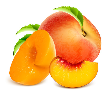 Ripe peaches, whole and slices. Fully editable handmade mesh. Vector illustration.