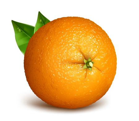 fully: Orange whole with leaves. Vector illustration of oranges. Fully editable handmade mesh.