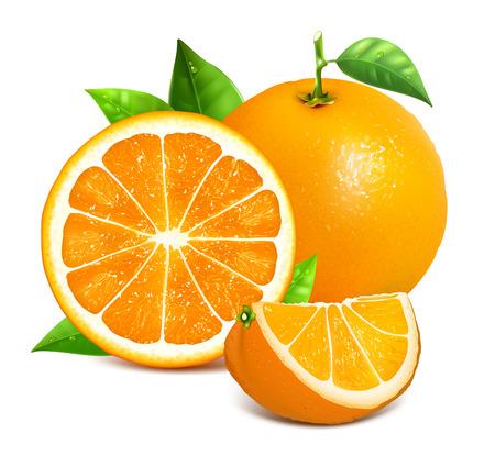 CITRICOS: el conjunto de naranja y rodajas de naranjas. Ilustración del vector de las naranjas. Totalmente hecho a mano con malla editable.
