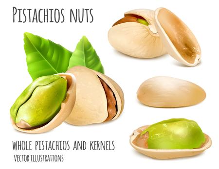Pistachio nuts. Illustration