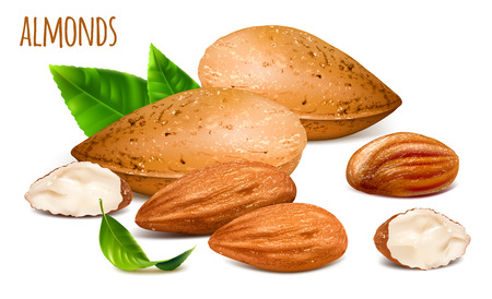 Almonds whole and almond kernels. Illustration