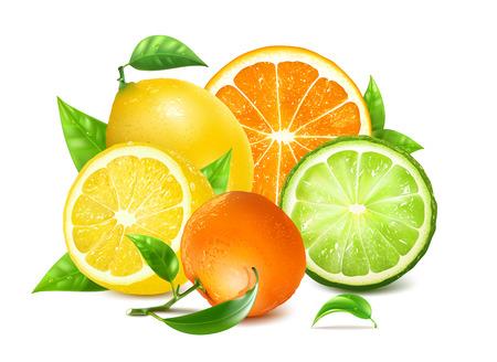 Cítricos frescos con hojas. Naranja, limones y otros cítricos. Malla hecha a mano completamente editable. Ilustración vectorial Ilustración de vector