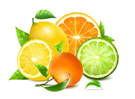 Frische Zitrusfrüchte mit Blättern. Orange, Zitronen und andere Zitrusfrüchte. Voll editierbares handgefertigtes Mesh. Vektor-Illustration. Vektorgrafik