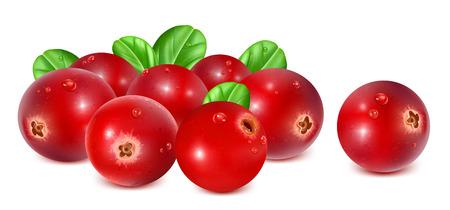 Ripe red cranberries with leaves. Fully editable handmade mesh. Vector illustration. Illustration