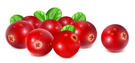 fully: Ripe red cranberries with leaves. Fully editable handmade mesh. Vector illustration. Illustration