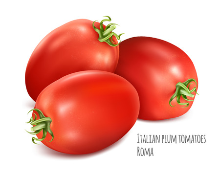 Italian plum tomatoes Roma. Vector illustration of tomato with green stem. Illustration