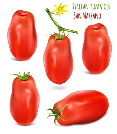 이탈리아 매실 토마토 산 마 르 자 노의 컬렉션입니다. 녹색 줄기와 토마토의 벡터 일러스트 레이 션. 일러스트