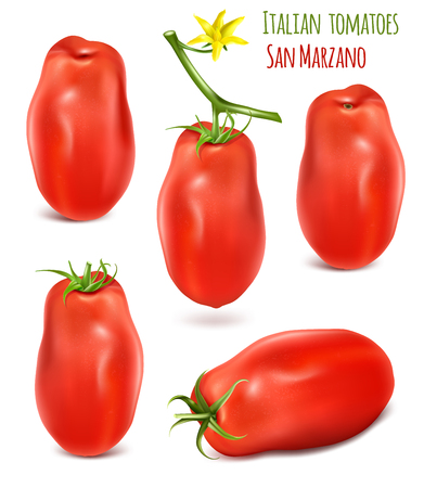 Collection of Italian plum tomatoes San Marzano. Vector illustration of tomato with green stem.