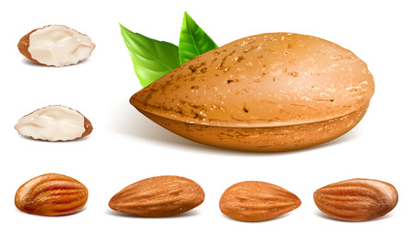 Almonds whole and kernels. Collection of vector illustration of almonds.