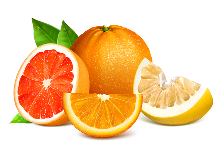 Fresh citrus fruits with leaves. Fully editable handmade mesh. Vector illustration of oranges, grapefruit and pomelo.