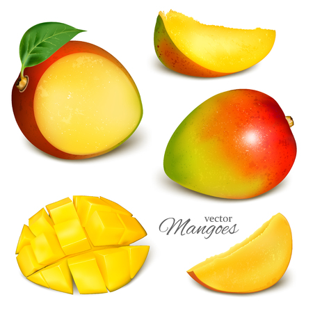 Collection of vector mangoes, whole, cut and slices. Vector illustration