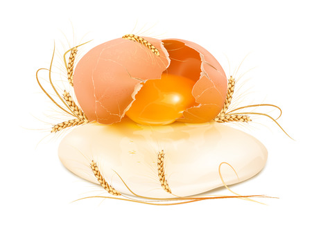 Raw broken egg in the shell with wheat. Vector illustration.