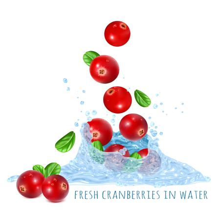 Fresh ripe cranberries in water splash. Vector illustration.