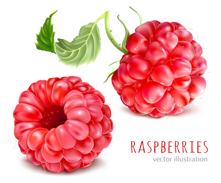 Raspberries vector illustration.  イラスト・ベクター素材