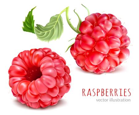 Raspberries vector illustration. Vectores