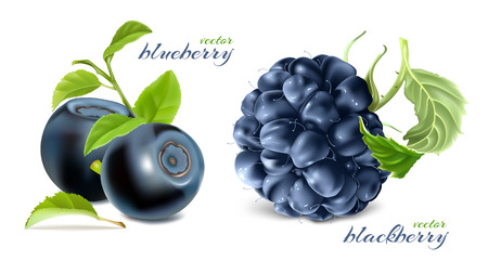 Ripe berries. Blueberries and black berries with leaves. Vector illustration.
