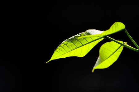 Leaf in black and light sunny Stock Photo