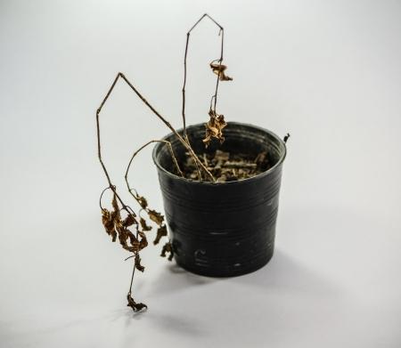 natur: foglia die vita natur vecchio vintage pianta triste
