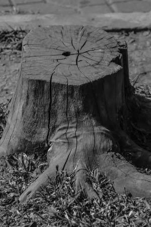 Stump is  poor Stock Photo - 17413924