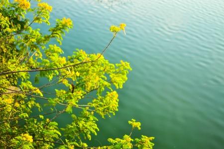 leaf and Lagoon