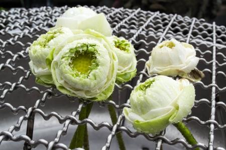 Fold lotus Stock Photo