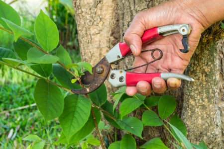 red pruning  shears and hand