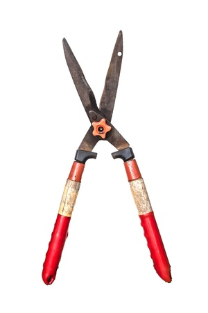 red pruning  shears in white background