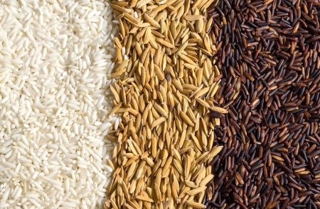 rice and paddy and brown rice photo