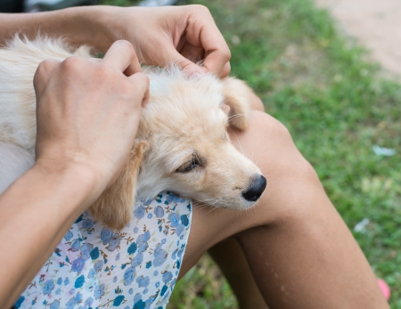 garrapata: Encontrar pulgas al perro