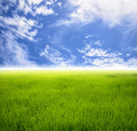 grass field with sky nobody