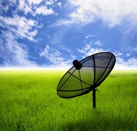 antena parabolica: Antena parab�lica en el campo de hierba