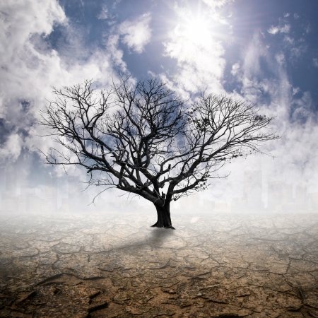 Arid,Cracked ground with tree die and sky  background photo