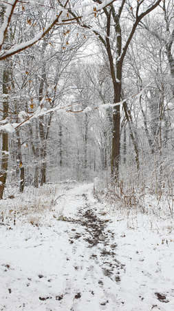 Soothing white winter landscape while snowing, concept of christmas and winter hiking