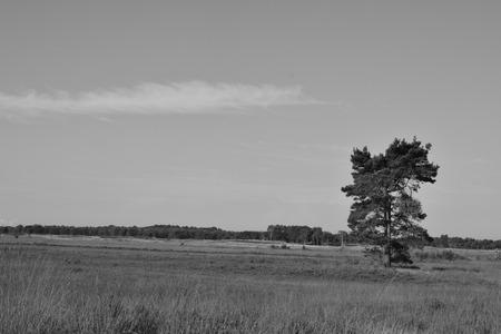 landscape in calm wood Belgium Stok Fotoğraf