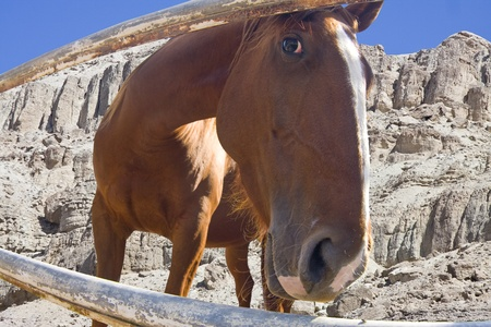 A horse looking curiously from under the fence.